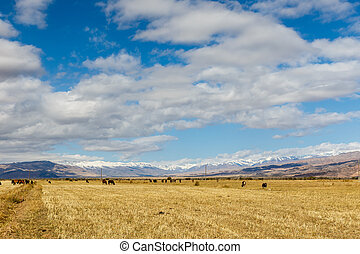 pasture in the mountains