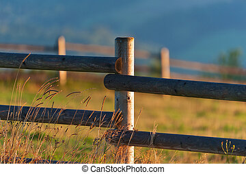 Summer morning in pasture land in mountaing detail close-up
