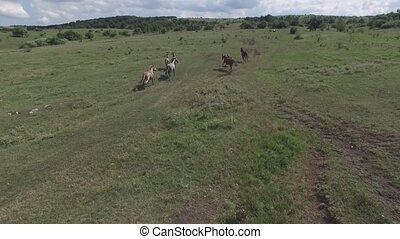 pasture on a mountain plateau - Horse running on a plateau...