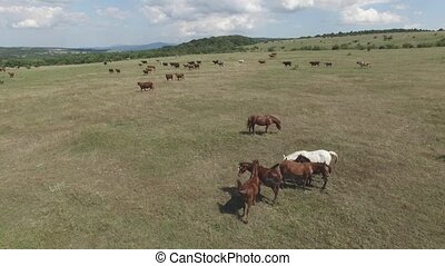 pasture on a mountain plateau