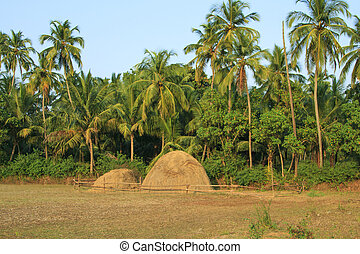 pasture on background of palm trees