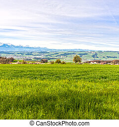 Pasture on the background of snow-capped Alps