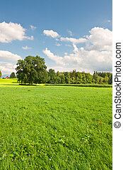 Pasture in Southern Bavaria, Germany