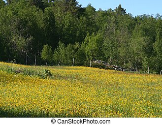 Summer meadow in the countryside