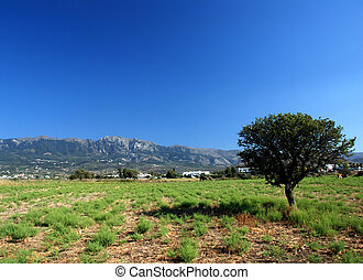 Pasture with a sinle olive tree