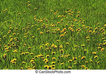pastureland, fleurs, 01