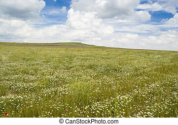 Pastureland full of flowers