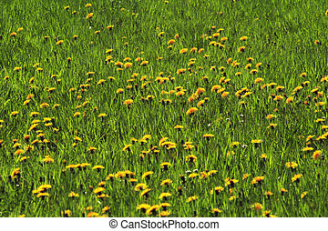pastureland with flowers 01