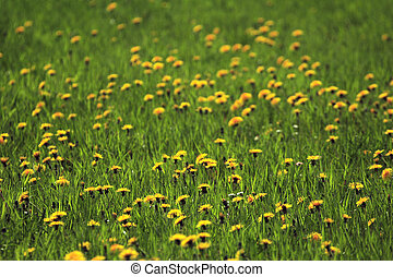 pastureland with flowers 02