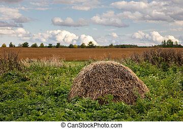 pastvina, dávný, maličkost, balíkovat