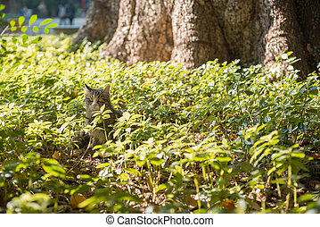 pastvina, kočka