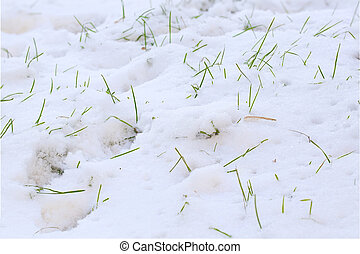 pastvina, sněžit, pod