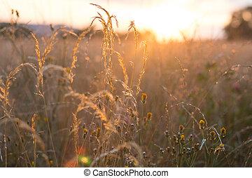 pastvina, večer, velký, západ slunce, venkov, léto, -