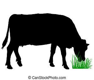pastwiskowy, krowa