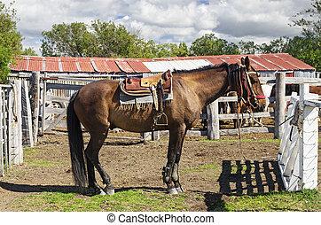 patagonia, cavallo