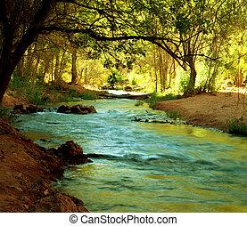 patak, alatt, erdő