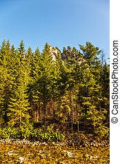 patak, közel, erdő, alatt, hegyek