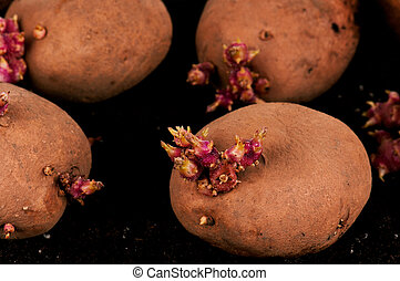 patate, cavoletti di bruxel