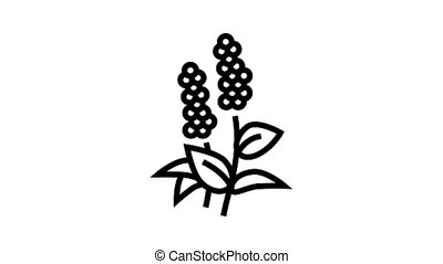 patchouli flowers aromatherapy animated black icon. patchouli flowers aromatherapy sign. isolated on white background