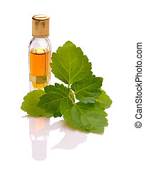 Patchouli sprig with essential oil. Isolated with reflection...