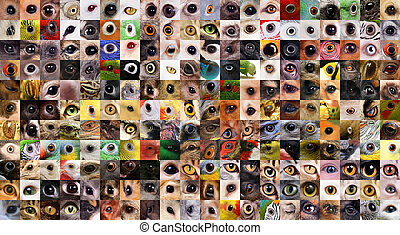 Patchwork of animals eyes - A variety of square cropped...