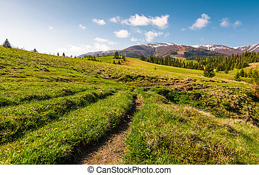 path along the grassy meadow in to the mountains. beautiful...