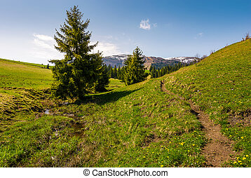 path along the grassy slope in forested area. beautiful...