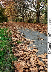 path along the trees in early fall - low angel path along...