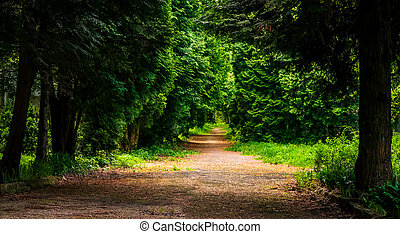 path among the trees in the park - path among the trees in...