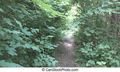 Path among the undergrowth of deciduous forests in the North Caucasus. Video on go