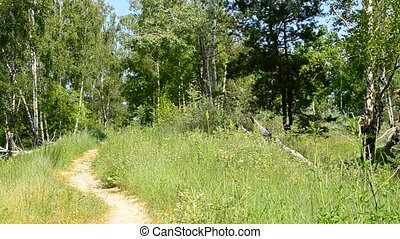 Path and meadow in green forest in summer