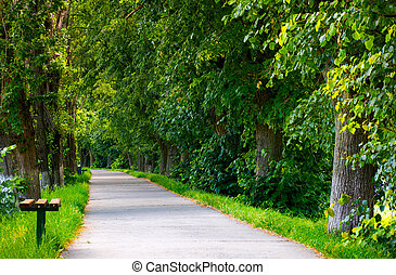 path below the linden trees. lovely summer scenery of the...