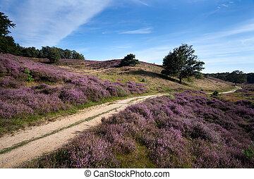 path between heather hills