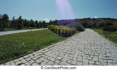 Path between pines in park