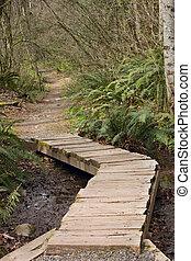 Path Bridge through Trees of Forest
