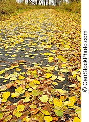 Path Covered with Aspen Leaves