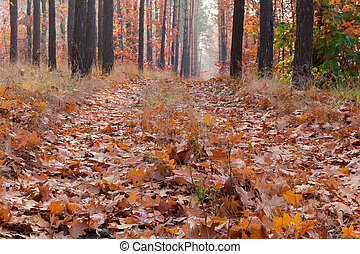 Path covered with fallen leaves in autumn forest close-up