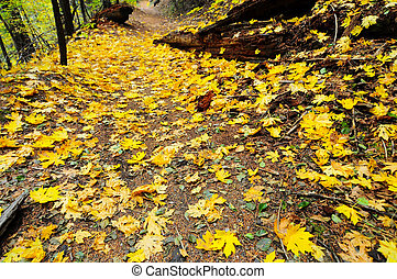 path covered with golden leaves