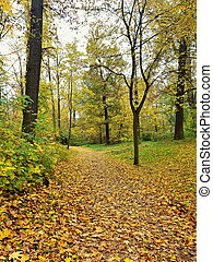 Path covered with leaves in forest, autumn season.