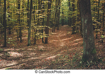 Path covered with leaves in the autumn forest