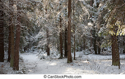 Path crossing snowy forest - Path crossing coniferous snow...