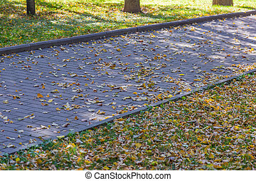 Path for pedestrians in the autumn park
