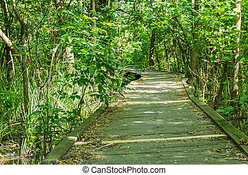 Path for walk into nature.