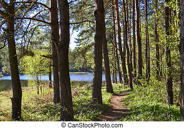 Path for walks in the forest park near the river. Spring early morning. Russia