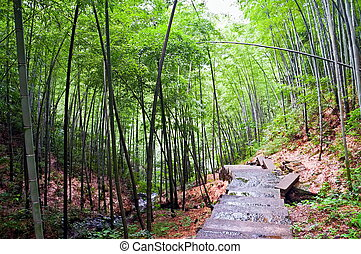 Path in a bamboo forest