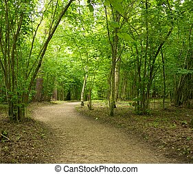 Path in a beautiful forest.