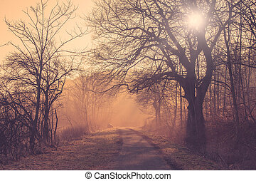 Path in a forest at sunrise