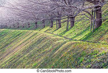 Path in a garden, Japan