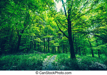 Path in a green forest