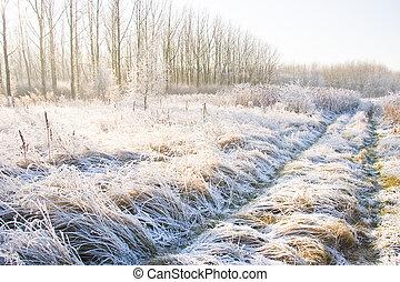 Path in a snowy field